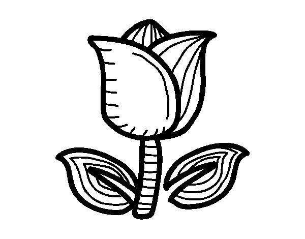 Dibujo de Tulipán para Colorear