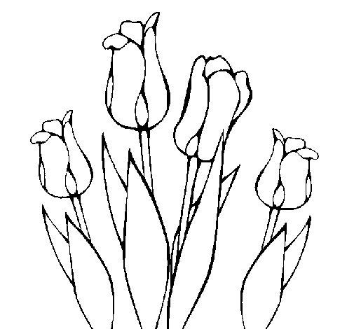 Dibujo de Tulipanes para Colorear