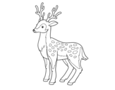 Dibujo de Un ciervo joven