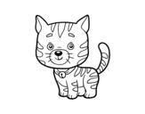 Dibujo de Un gato doméstico