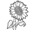 Dibujo de Un girasol