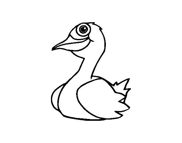 Dibujos De Patos Para Colorear Para Niños: Dibujo De Un Pato Para Colorear