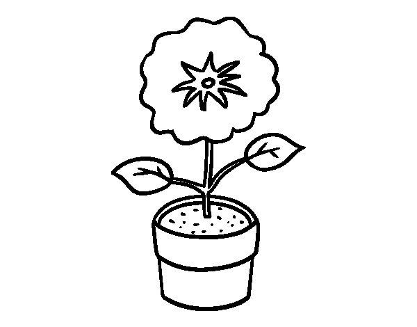 Dibujo de Una flor de primavera para Colorear