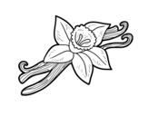 Dibujo de Vainilla