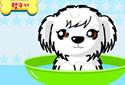El cachorrillo